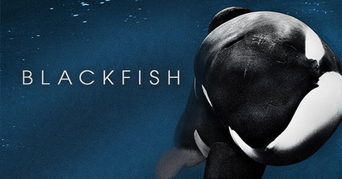 Blackfish Stream
